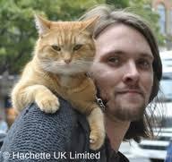 A street cat named bob still